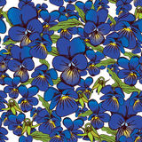 Flowers of pansies and leaves seamless blue background patterns Royalty Free Stock Images