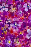 Flowers pansy, violet texture oil painting. Abstract hand-painted flowers background. Painting abstract mix colorful pansy flowers background. vertical seamless Stock Image