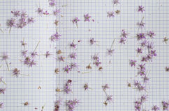 Flowers on paper Royalty Free Stock Images