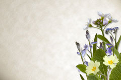 Flowers on parchment background Stock Images