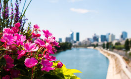 Flowers and Paris skyline. Bright pink natural flowers along the River Seine with the skyline of Paris in the background.  Focus on flowers Royalty Free Stock Photo