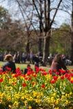 Flowers in the park. A flower bed in Park Stuttgart Schlossgarten in spring stock images