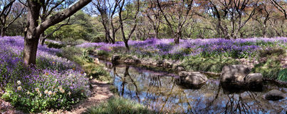 Flowers park. Panoramic summer flowers park image Stock Image