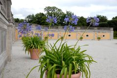 Flowers in the park of the castle in Germany Bruhl Stock Image