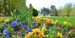 Flowers in park in city Podebrady, czech republic. Flowers in park on famous kolonada street in spa city Podebrady, Czech republic. View on fontain Stock Photo