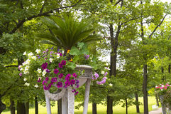 Flowers in the park. Flowers in Tsarskoe Selo Park. Russia Stock Image