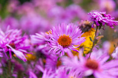 Flowers in park. Violet flowers in city park royalty free stock photos