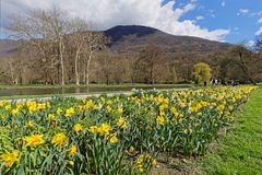 Flowers in the Park of Vizille. Park of Vizille. The castle park is the most popular site in the Isere region and a historic monument since 1991. The design of Stock Photography