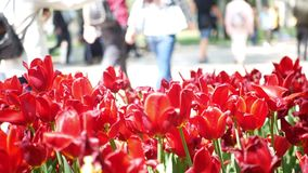 Flowers park walking people. Close up of beautiful flowers in park with walking people behind stock video footage