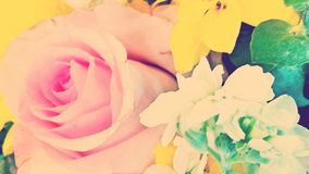 Flowers. Pastels flowers roses  background  pink yellow Stock Photography