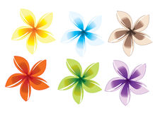Flowers pattern. Decoration flowers color hawaiian pattern Stock Images