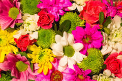Flowers. Pattern consisting of different types of flowers Royalty Free Stock Photo
