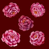 Flowers pattern - pink peonies, roses oil painting. Flowers pattern design pink peonies, roses floral flower. Hand drawn creative flowers painting. It can be Royalty Free Stock Photography