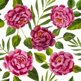 Flowers pattern - pink peonies, roses oil painting. Flowers pattern design pink peonies, roses with green leaves floral flower. Hand drawn creative flowers Royalty Free Stock Photos