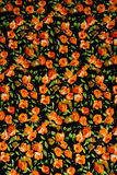 Flowers pattern useful for textures Royalty Free Stock Images