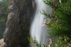 Flowers before a peaceful waterfall in Chile stock photography