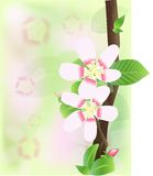 Flowers of peach Royalty Free Stock Photography