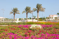 Flowers at The Pearl in Doha, Qatar Stock Image