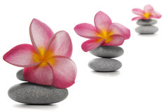 Flowers and Pebbles Royalty Free Stock Images