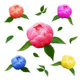 Flowers  peonies and  leaves for Valentine`s Day and the eighth of March Royalty Free Stock Images