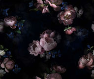 Flowers peony on deep black texture royalty free stock image