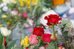 Flowers from people paying respect to the victims in the terror Royalty Free Stock Photos