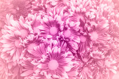 Flowers petal made with color filters Stock Photo