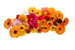 Flowers with petals Stock Photography