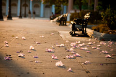 Flowers petals on the alley ground. #2. Flowers petals on the alley ground in the evening sunlight. Park benches in a background. #2 stock images