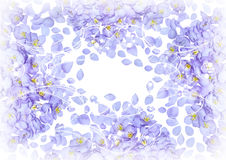 Flowers petals card for your design Stock Image