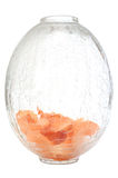 Flowers petals on cracked glass vase. Stock Images