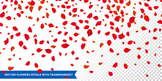 Flowers petals falling on vector transparent background Royalty Free Stock Photography