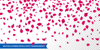 Flowers petals falling on vector transparent background Stock Image