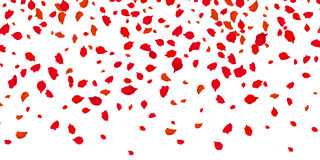 Flowers petals falling on vector transparent background Stock Photos