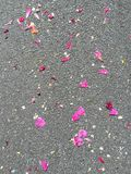 Flowers petals on the street during a festival Royalty Free Stock Photo
