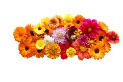 Flowers with petals of various colours royalty free stock image