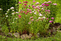 Flowers Phlox Paniculata Grow In Summer Garden. Royalty Free Stock Images