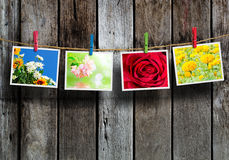 Flowers photo Royalty Free Stock Photo