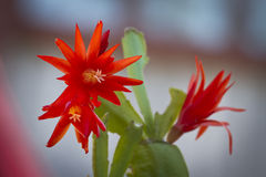 Flowers. Photo of plant in the garden Stock Images
