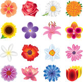 Flowers photo-realistic  set Stock Photo