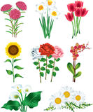 Flowers photo realistic  set Stock Photos