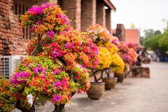 Portrait Of Flowers In Ayutthaya City Of Thailand