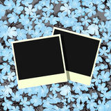 Flowers, picture frames Royalty Free Stock Image