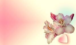 Flowers with pink background. Two flowers with pink background and a heart on the bottom Royalty Free Stock Photo