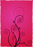 Flowers on pink background. Royalty Free Stock Photos