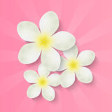 Flowers on pink background Royalty Free Stock Photography