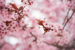 Flowers in pink color on branch Stock Image