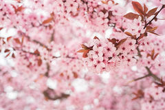 Flowers in pink colors Royalty Free Stock Image