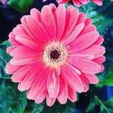 Flowers. Pink gorgeous nature Royalty Free Stock Images