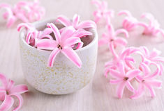 Flowers pink hyacinth Royalty Free Stock Images